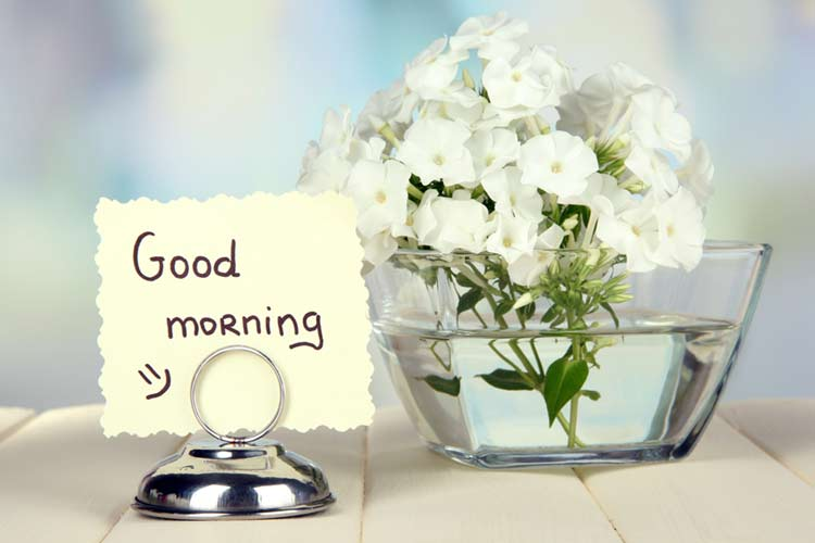 Good morning romantic flower