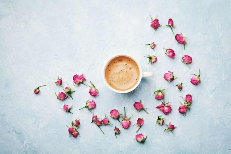 Good morning rose for girlfriend