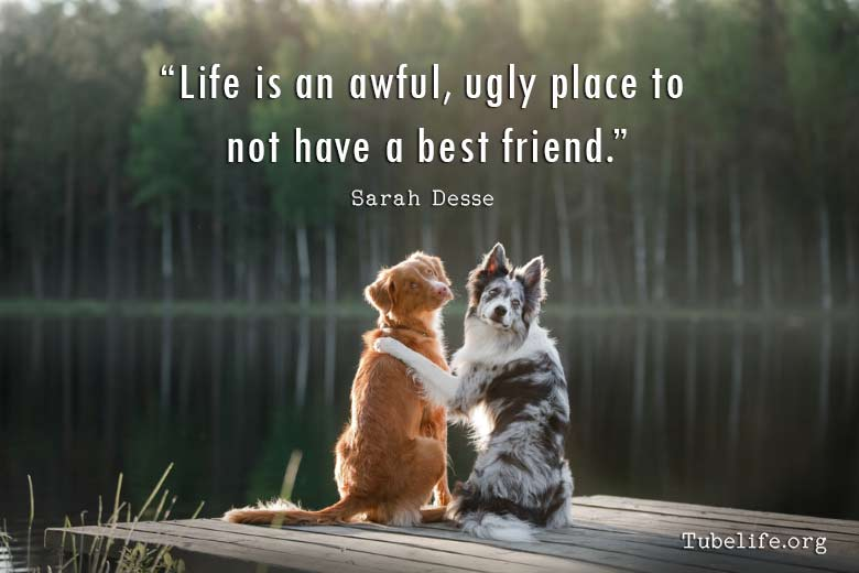 New Friendship Quotes Free Download With Images